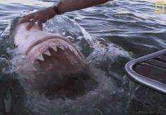 Shark harassment