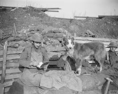 A trench message dog of the 5th Battalion, Manchester Regiment stands on a sandbagged wall as he waits for an officer ( left) to complete the note he is writing, Cuinchy. One soldier pats the dog and holds him steady. 26 January 1918. (c) IWM (Q6476)