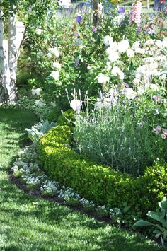 Box hedge with white underplanting