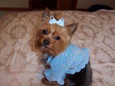 LITTLE MISSY  Dog Shrug Sweater Knit/Crochet by RosaBellasCloset, $4.50