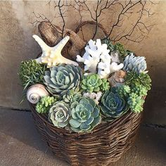 Interesting one by house_of_sunshine #homedesign #contratahotel (o) http://ift.tt/1QM9f0z up with the amazing @tuvaluhome in San Clemente Ca- Del Mar St. These beautiful basket succulent arrangements will be available for custom order each unique & handma
