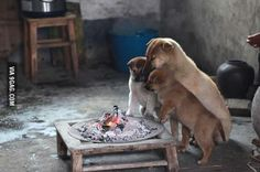 Mom and her pups staying warm in cold winter.