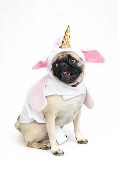 unicorn pug!