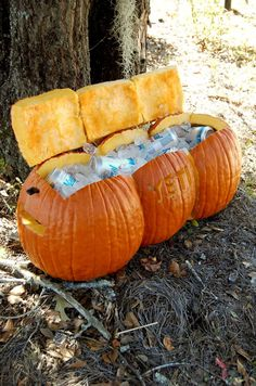 The Beer Is Ice Cold inside pumpkin coolers for an autumn wedding
