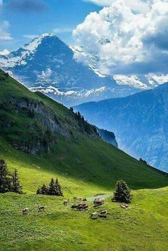 The Eiger North Face, Kleine Scheidegg, Jungfrau Region, Switzerland. Places Around The World, Oh The Places You'll Go, Places To Travel, Places To Visit, Around The Worlds, Travel Destinations, Eiger North Face, La Provence France, Beautiful World