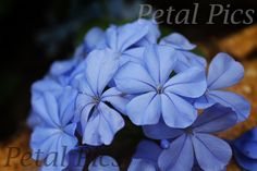 https://www.etsy.com/listing/448722856/digital-download-floral-photography?ref=shop_home_active_12  Digital Photography Download - Blue Wildflower by Petal Pics on Etsy - Wildflower Photo, Photography Print, Nature Photography, Flower, Blue, 4x6, 5x7, 8x10, 11x14