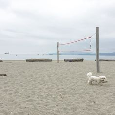 Where are all the beach people? by maltipoo_alfie