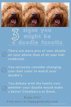 96 Best doodle dog humor images in 2019 | Goldendoodle