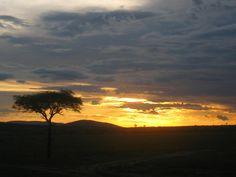 Kenya, Massai Mara