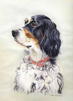 """""""English Setter Head Study"""" A Limited Edition Print"""
