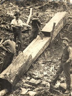 Loggers working at Walhalla in Victoria Australia, George Fletcher built and operated the sawmill in Walhalla, Victoria. Photo shared by Museum Victoria, Australia. Australia Day, Victoria Australia, Old Pictures, Old Photos, Vintage Pictures, Archaeological Discoveries, History Timeline, The Hard Way, Vintage Photographs
