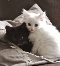 Hello There Little Kitty - August 2017 - We Love Cats and Kittens Cute Kittens, Fluffy Kittens, Fluffy Cat, Cats And Kittens, Black Kittens, Pretty Cats, Beautiful Cats, I Love Cats, Crazy Cats