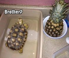 Funniest Animal Pictures 15 Hilarious Turtle Memes Sharing is caring, don't forget to share ! Funny Animal Memes, Cute Funny Animals, Funny Animal Pictures, Cute Baby Animals, Funny Cute, Funny Jokes, Animal Humor, Lit Pictures, Jeep Funny