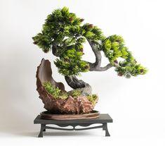 Bonsai Zokei made in the style of Bankan
