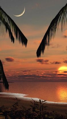 Coconut trees, Sunset, Beach**.