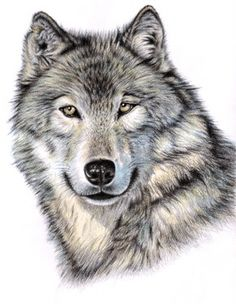 "Saatchi Online Artist Nicole Zeug; Drawing, ""The Wolf"" #art"