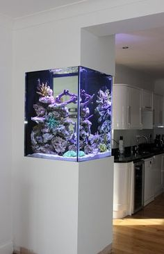 Setting up your First Aquarium - Life ideas tank ideas furniture Setting up your First Aquarium Aquarium Design, Home Aquarium, Aquarium Fish Tank, Aquarium In Wall, Aquarium Ideas, Reef Aquarium, Home Room Design, Dream Home Design, Interior Design Living Room
