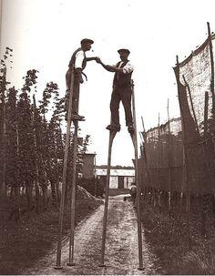 Hops harvesting befo