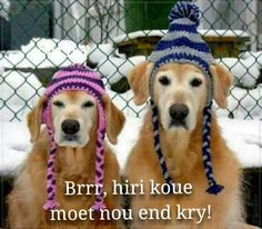For my Golden Retriever Loving Family // Canadian winter dogs I Love Dogs, Cute Dogs, Funny Dogs, Funny Animals, Cute Animals, Tier Fotos, Terriers, Dog Life, Animal Pictures