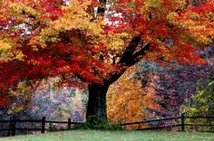 Fall in Rhode Island  I spent my birthday here yeearrs ago (maybe my 14th or 15th?) It's the most beautiful Fall I've ever seen!