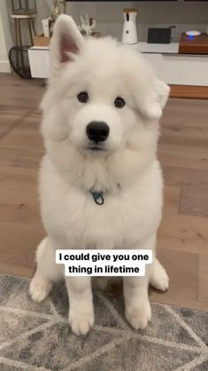 Adorable Cute Animals, Baby Animals Super Cute, Cute Baby Dogs, Cute Funny Dogs, Love Dogs, Cute Little Animals, Animals Beautiful, Funny Animal Jokes, Animal Memes