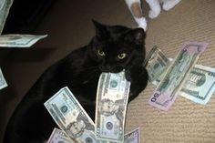 16 Cats and money ideas | cats, animals, money cat