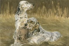 English Setter Drawing | English Setters