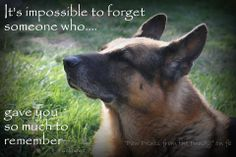 They may leave this earthly world before we do, but they have left paw prints on our hearts forever...