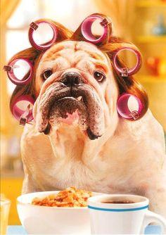 Coffee Humor | How Ihow my dog ooks before coffee #coffee #funny