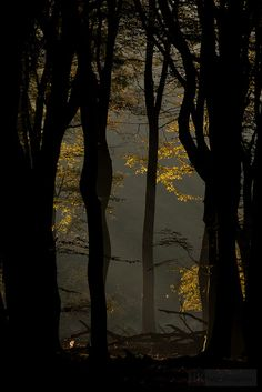 The dancing trees by hknatuurfoto (Hans Koster), via Flickr