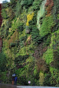 Le pareti verdi più belle del mondo! Seguici anche su Facebook: www.facebook.com/lifegate