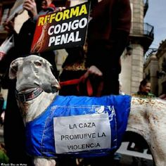 William #greyhound denunciando la caza.