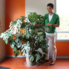 Darryl Cheng and his Monstera deliciosa featured on The Sill blog