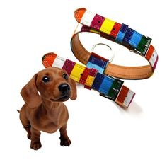 Anboo Colorful Pet Harness Belt PU Simple Adjustable Dog Harness Rainbow ** You can find out more details at the link of the image. (This is an affiliate link and I receive a commission for the sales)