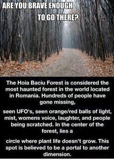 I'd love to check this out :) Hoia Baciu Forest in Cluj-Napoca Romania. The most haunted forest in the world Creepy Stories, Ghost Stories, Horror Stories, Paranormal Stories, Paranormal Activities, Paranormal Pictures, Strange Stories, Fun Stories, Creepy Facts
