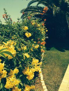 Gardens at Casa Luar