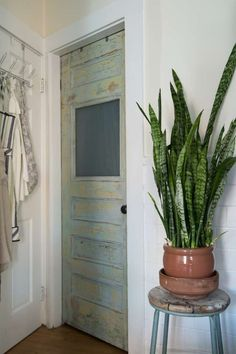 Snake plants, also know as mother-in-law's tongue or sansevieria, have become increasingly popular, and rightly so jungle apartment therapy Chill, Low-Maintenance Snake Plants are Perfect for People Who Can't Keep Anything Alive Decor, Apartment Garden, House, Home, Easy Plants To Grow, Apartment Therapy, Indoor, Low Maintenance Plants, Indoor Plants