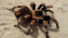 22 araignées totalement effrayantes que vous ne voulez pas croiser !