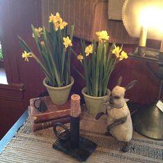 wonderful artificial daffodils...