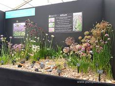 Jackie Currie, Alliums, and the RHS Hampton Court Palace Flower Show 2017 - Pumpkin Beth Allium Sphaerocephalon, Mushroom Compost, Rhs Hampton Court, Shows 2017, Replant, Chelsea Flower Show, Surrey, Conservation, The Hamptons