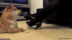 lol luv that dog, nice trick :D
