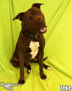 08/30/14 sl~ Zeke Terrier Mix • Adult • Male • Medium Summit County Animal Control Department Akron, OH. OH Dogs are $90.00 and include adoption fees, vaccination, & flea treatment. Hours: Office open 7:30AM-4PM, Mon-Fri. Closed Sat, Sun, & holidays. Animal Control is open 10AM-5PM on Mon, Tues, Thurs & Fri & 10AM-7PM on Weds & 10AM-3PM on Sat. Closed on Sundays and holidays. Call (330)643-2845 for more info.
