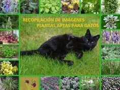 http://jardineroalgeciras.blogspot.com/2016/08/44-imagenes-de-plantas-aptas-para-gatos.html