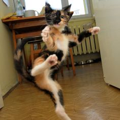 Ninja kitty!