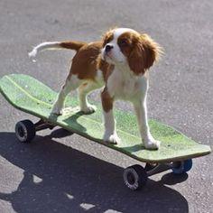 Cuki kutya