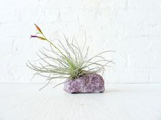 Air Plant Crystal Garden  Pretty Purple by EarthSeaWarrior on Etsy, $50.00 Air Plant Terrarium, Terrariums, Fertilizer For Plants, Crystal Garden, Ancient Jewelry, Air Plants, Botany, Stones And Crystals, Flora