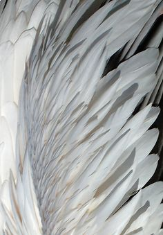 Feathered . . .