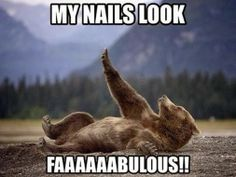 Funny animal pictures with 20 pics like bear showing off his nails. Funny animal pictures with captions. Funny Animal Memes, Animal Quotes, Cute Funny Animals, Funny Animal Pictures, Funny Photos, Funny Memes, Funny Sayings, Animal Captions, Bear Pictures