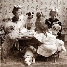 Vintage photo from 1906 - Poodle tea party Vintage Pictures, Old Pictures, Poodles, Mundo Animal, Tier Fotos, Vintage Tea, Vintage Girls, Dog Photos, Animals Photos