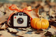 bow, camera, photography, pumpkin, vintage